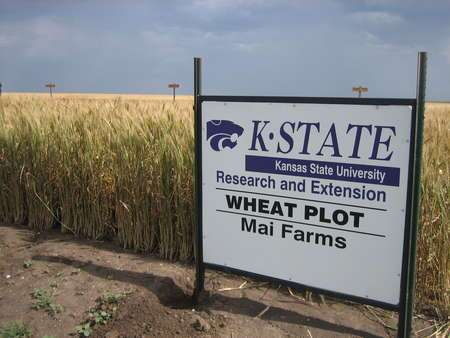 kansas-wheat-tour-382.jpg