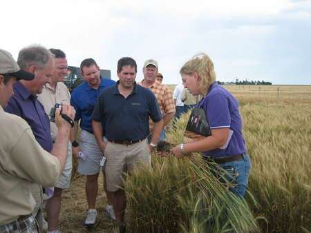 kansas-wheat-tour-402.jpg