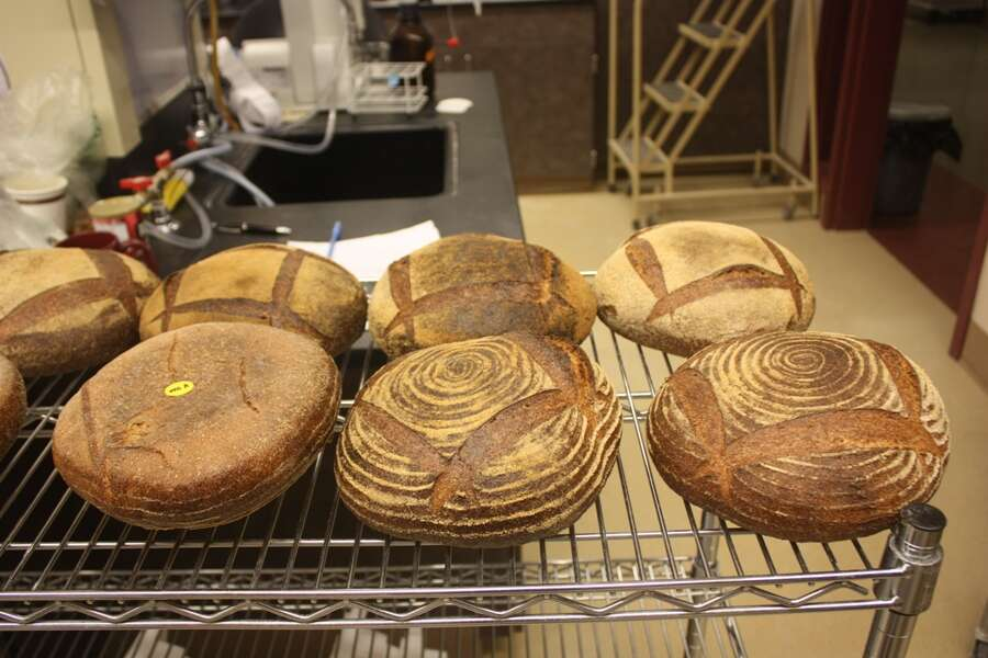 WSU Bread Lab 060