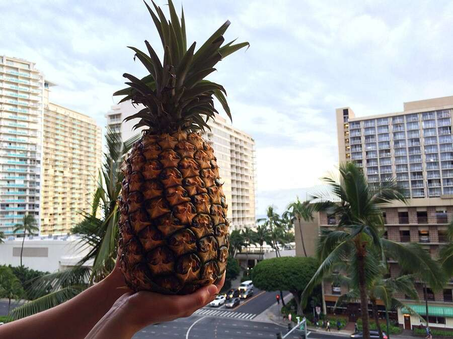 Pineapple with a view