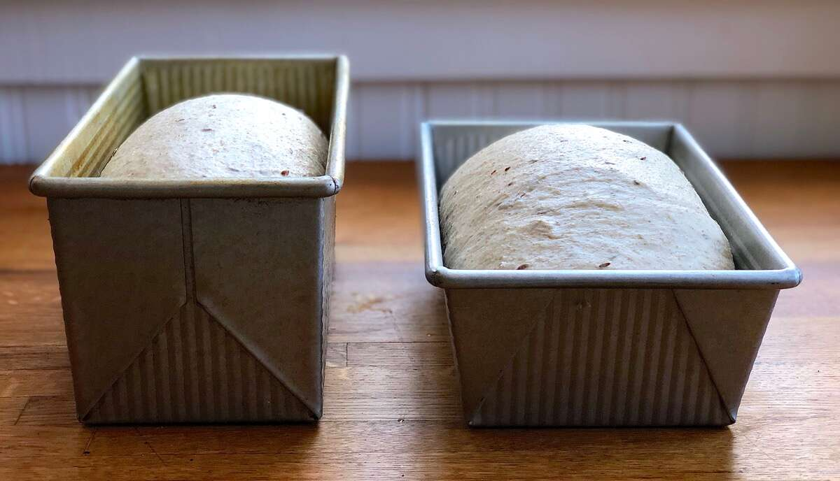 Two loaves of rye bread rising in pans side by side