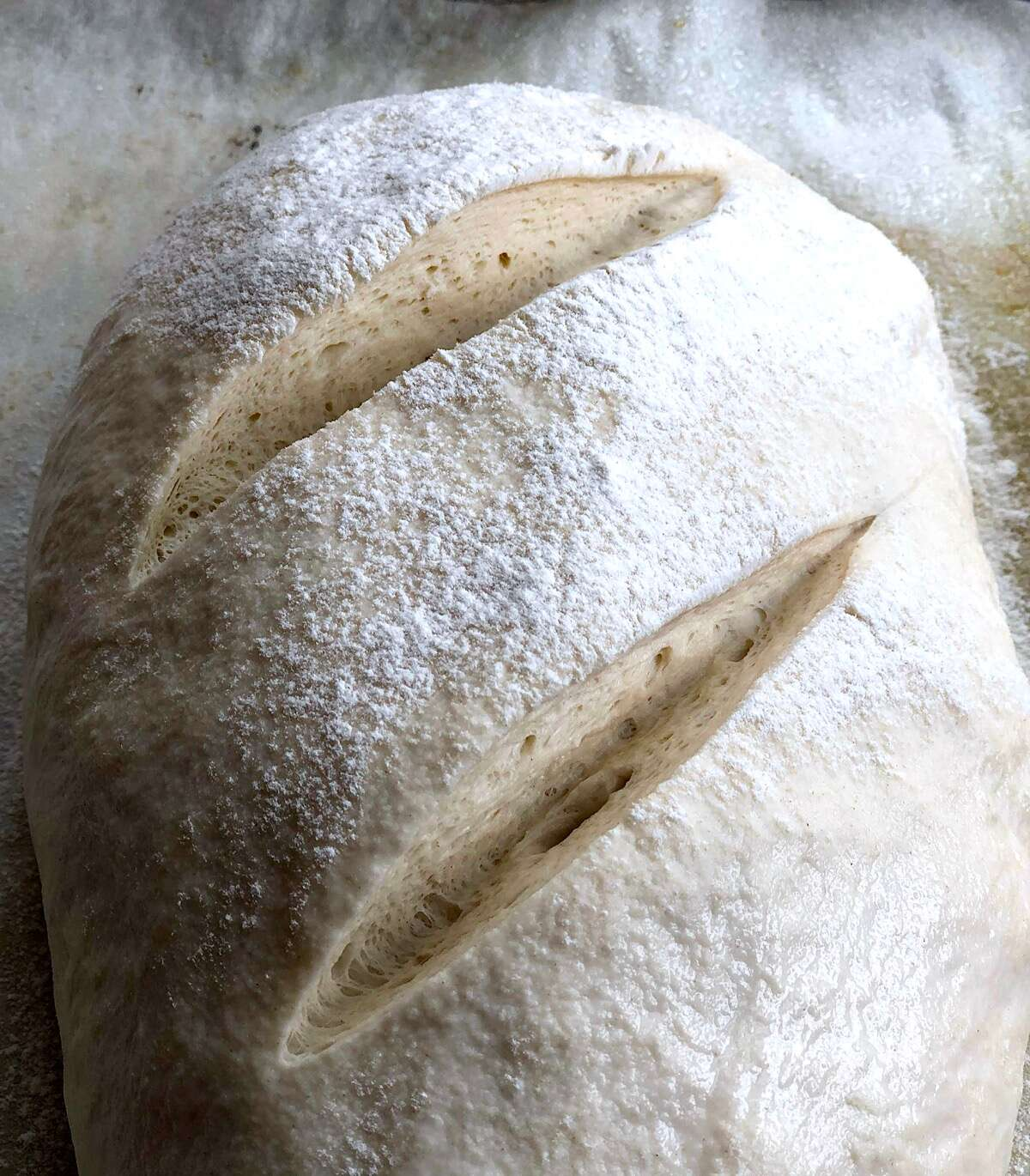 Loaf of risen sourdough bread slashed deeply, ready to go into the oven.