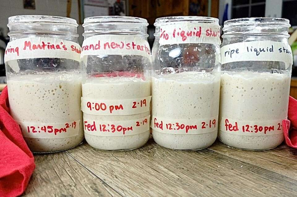 Sourdough Starter Troubleshooting via @kingarthurflour
